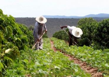 Agrotóxicos provocam lesão no DNA de trabalhadores rurais goianos, segundo pesquisa da UFG