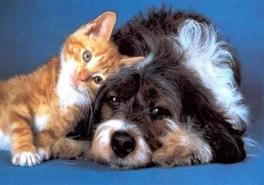 Goiânia recebe feira de adoção de pets neste sábado