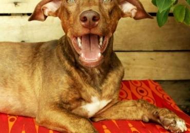 2º Quintal Pet Park promove adoção responsável e tem petiscos naturais para seu animal de estimação em Goiânia