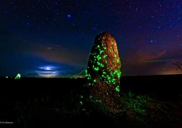 Bioluminescência: o incrível e raríssimo fenômeno que só acontece aqui em Goiás