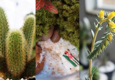 Fotos para quem perdeu o Bazar Pé de Flor, Suculentas e Cactos