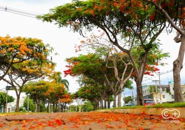 Endereços bacanas pra sair de casa sem furar a dieta em Goiânia