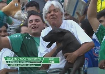 Torcedor leva porco de verdade ao estádio em Goiânia e viraliza na internet