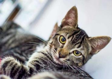 Feira de adoção de cães e gatos acontece neste domingo em shopping de Goiânia