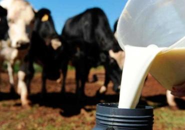 Maior evento no ramo leiteiro do país acontece em Uberlândia