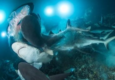 12 fotos impressionantes da vida embaixo d'água