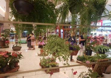 Aparecida de Goiânia recebe Feira de Flores com espécies a partir de R$ 2,50