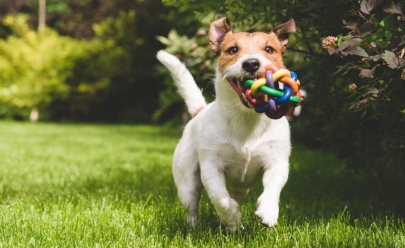 8 hotéis que garantem o bem-estar e a diversão do seu animal de estimação em Goiânia