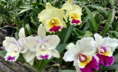 Goiânia recebe Exposição de Orquídeas com entrada gratuita