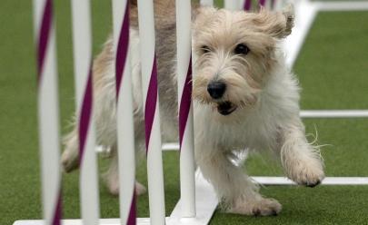 Goiânia recebe evento esportivo para cães e arrecada doações para instituições de proteção animal