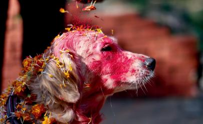 Conheça o famoso Festival do Nepal que celebra o amor canino