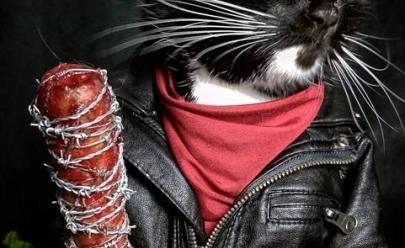 Gatos vestidos de personagens da cultura pop fazem sucesso na Internet