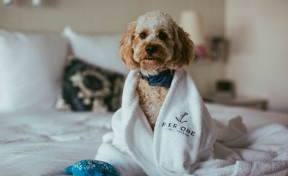 Hotel de Goiânia oferece hospedagem para animais de estimação