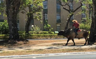 Homem passeia montado em boi e vestido de vaqueiro em Brasília
