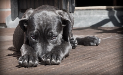 Projeto na Câmara visa proibir o sacrifício de cães e gatos em Goiânia