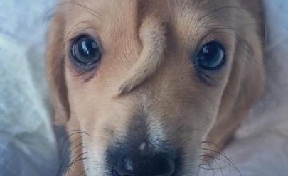 Cãonicórnio: cachorrinho nasce com rabinho no rosto e conquista web