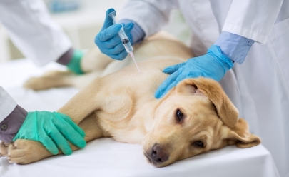 Goiânia terá primeiro hospital público veterinário