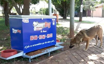 Pet shop alimenta animais de rua em Campo Grande