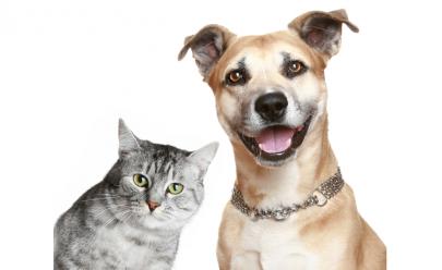 ONG lança financiamento coletivo para criação de clínica veterinária móvel