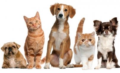 Mais de 40 animais são postos para adoção em Goiânia