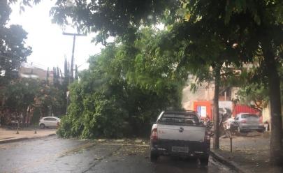 Forte chuva derruba árvores e fecha ruas em Goiânia