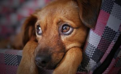 SAMU veterinário deve ser criado em Goiânia para socorrer os nossos pets