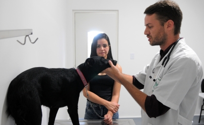 Governo do DF oferece mil vagas gratuitas para castração de cães e gatos