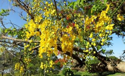 10 passeios para curtir a natureza e aproveitar a primavera em Uberlândia