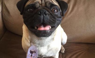 Cantor sertanejo faz apelo para recuperar cachorro roubado em Aparecida de Goiânia