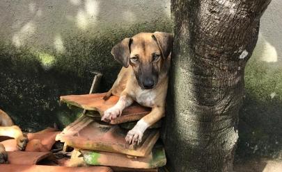 Projeto promove Natal em ONGs para animais abandonados de Goiânia