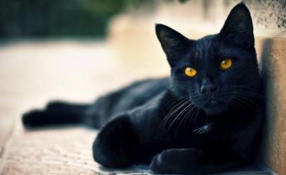 13 razões para amar um gato preto