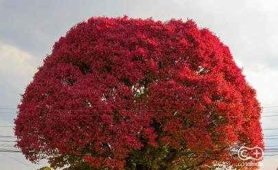 35 endereços para você curtir e fotografar a Primavera em Goiânia