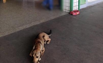 Supermercado em Goiânia dá abrigo com comida e água a cachorrinha de rua e conquista a web