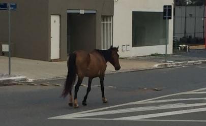 Vídeo mostra cavalo andando sozinho em uma das avenidas mais movimentadas de Goiânia