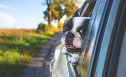 9 dicas para quem pretende viajar com o pet
