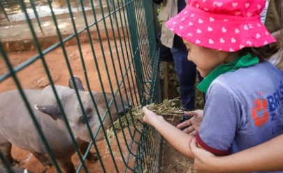 Zoológico de Brasília abre inscrições para 'colônia de feras' com muitas atividades para as crianças