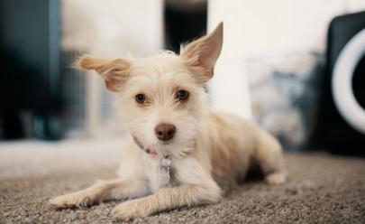 Câmara Legislativa do DF aprova projeto de lei que cria Samu para animais
