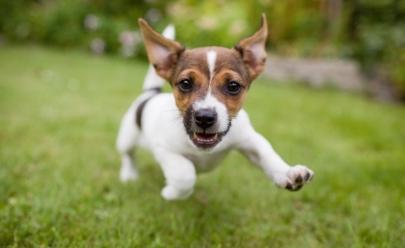 6 lugares incríveis  para passear com o cachorro em São Paulo
