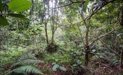 Desafio: você consegue achar os 12 soldados escondidos nesta foto na selva?