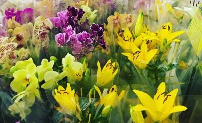 Brasília recebe 3ª edição de circuito de flores ornamentais