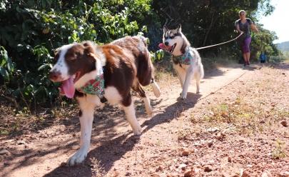 Primeira versão de Pet Adventure chega a Goiânia