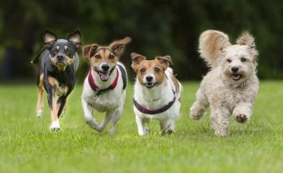 Câmara dos Deputados aprova prisão para quem maltratar animais