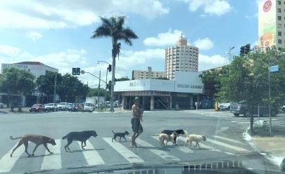 Homem atravessa faixa de pedestre em Goiânia com 8 cachorros e lembra famosa foto dos Beatles na Abbey Road