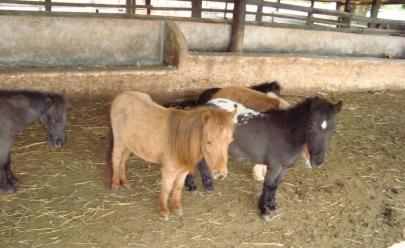 Fazenda com mini animais será atração nas férias escolares do Buriti Shopping em Goiânia