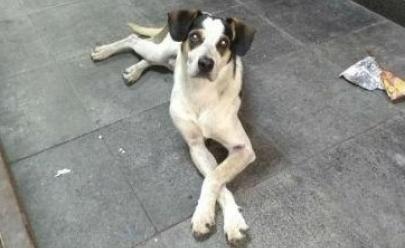 Carrefour se pronuncia sobre morte de cachorro a pauladas em unidade de SP