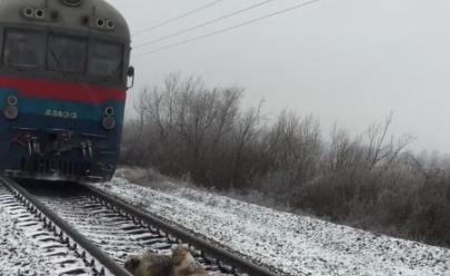 Cachorro deita em linha do trem para proteger companheira ferida; veja vídeo