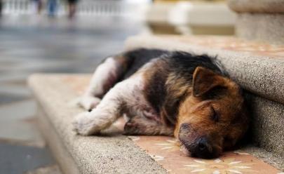 Projeto 'Cão Comunitário' que visa cuidar de cãezinhos abandonados é aprovado em Goiânia