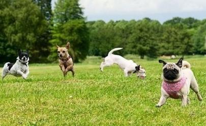Goiânia recebe Dog's Day, maior evento gratuito direcionado a pets do estado