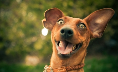Goiânia recebe evento especializado em cães