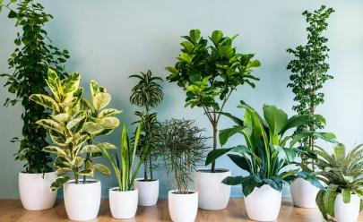 12 plantas perfeitas para decorar sua casa